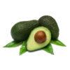 High Quality Fresh Avocado